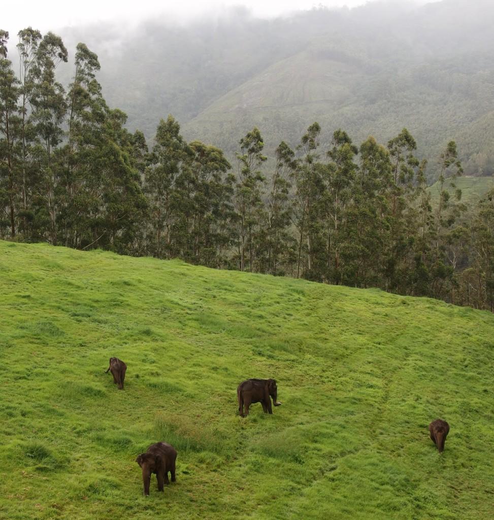 Sloni na procházce - nedaleko od Pavanova nového domu